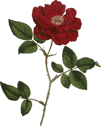 Al-Warda - Die Rose